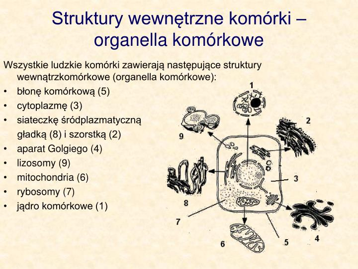 Struktury wewntrzne komrki  organella komrkowe
