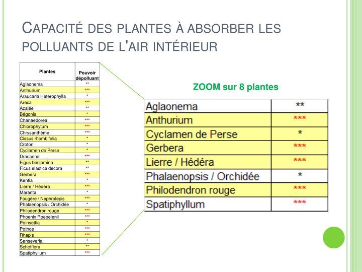 Capacité des plantes à absorber les polluants de l'air intérieur