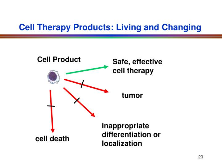 Cell Therapy Products: Living and Changing