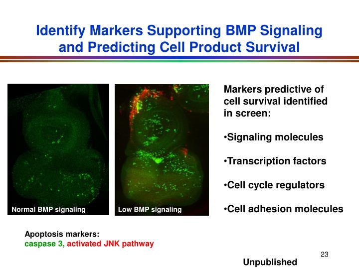 Identify Markers Supporting BMP Signaling and Predicting Cell Product Survival