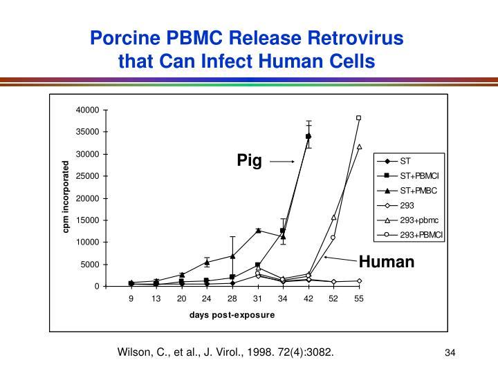 Porcine PBMC Release Retrovirus