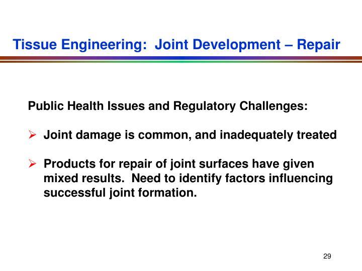 Tissue Engineering:  Joint Development – Repair