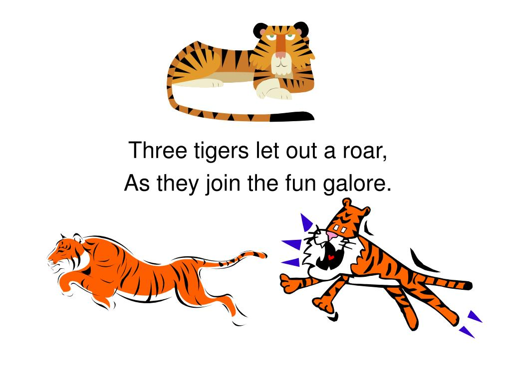 Three tigers let out a roar,