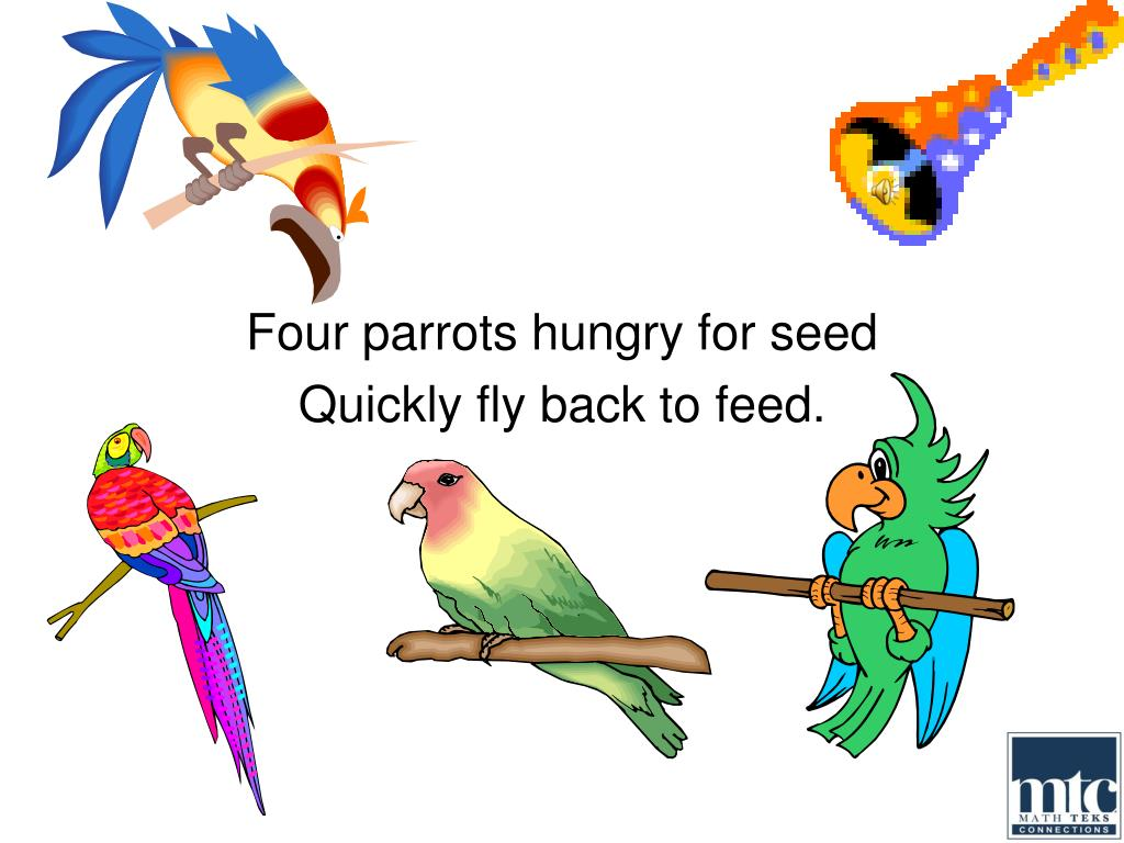 Four parrots hungry for seed