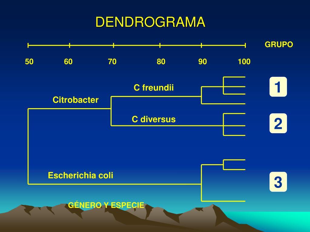 DENDROGRAMA