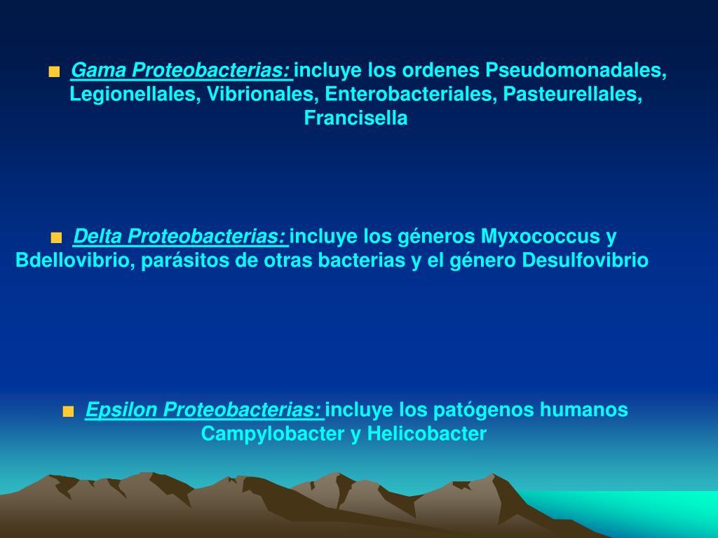 Gama Proteobacterias: