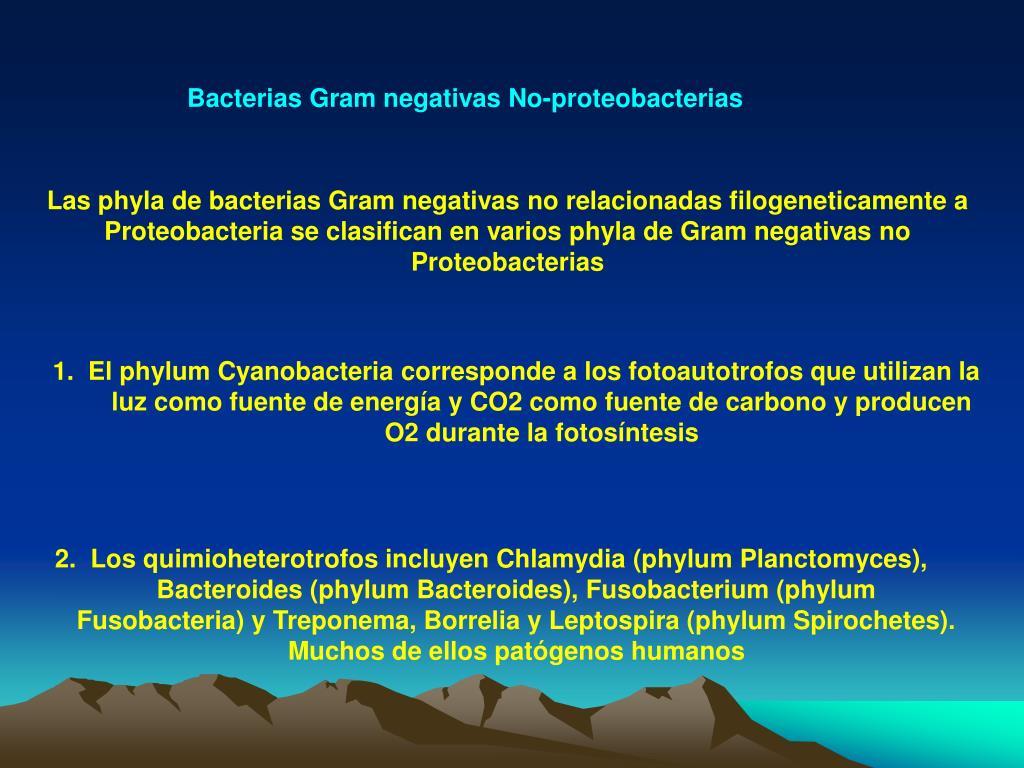 Bacterias Gram negativas No-proteobacterias