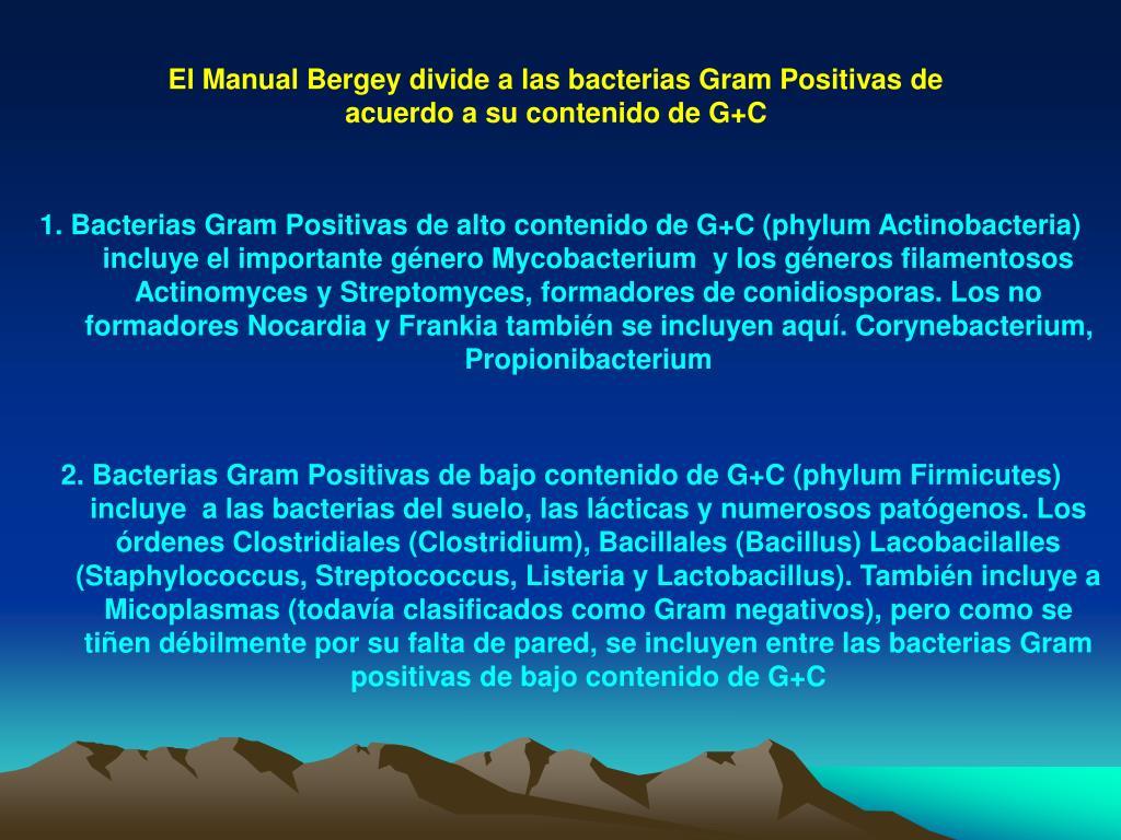 El Manual Bergey divide a las bacterias Gram Positivas de acuerdo a su contenido de G+C