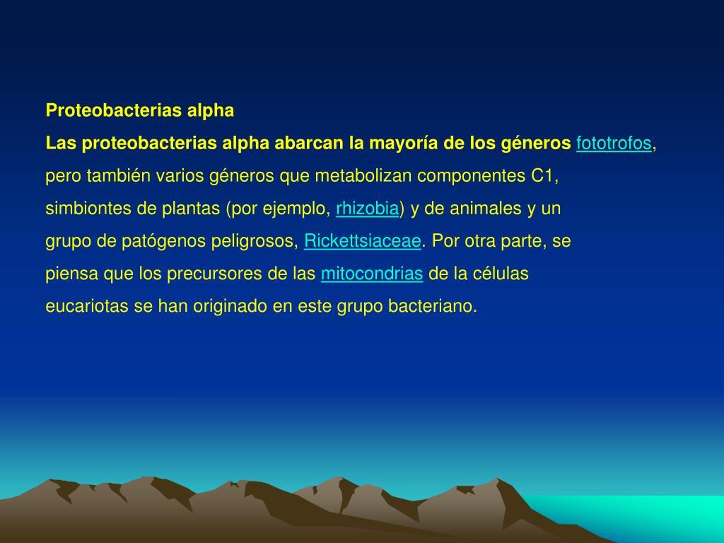 Proteobacterias alpha