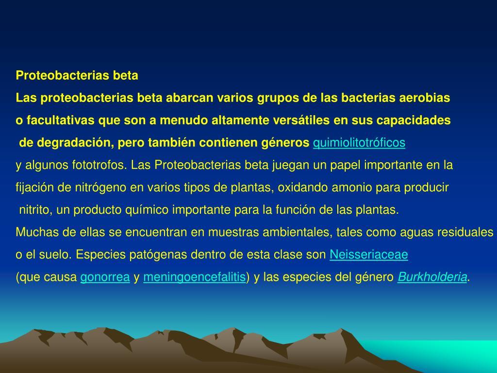 Proteobacterias beta