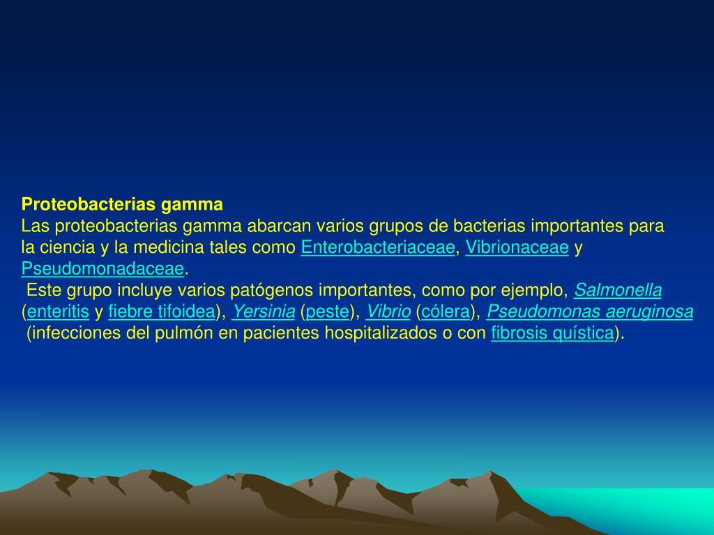 Proteobacterias gamma