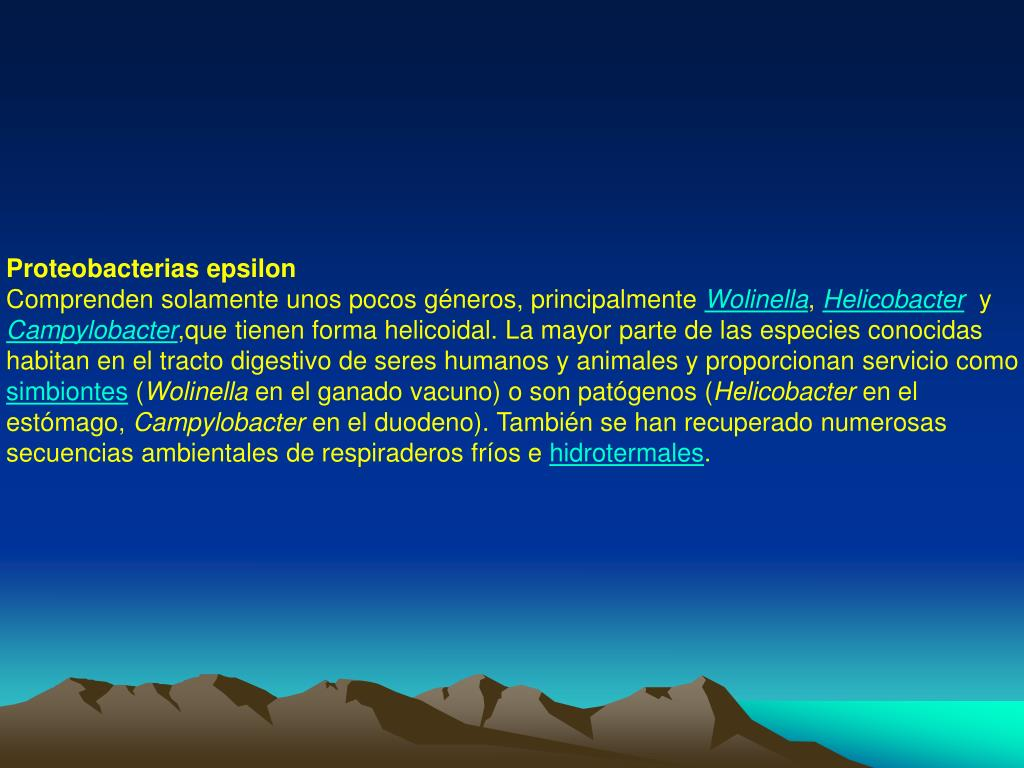 Proteobacterias epsilon
