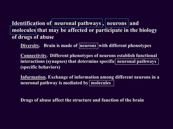 Identification of  neuronal pathways ,  neurons  and  molecules that may be affected or participate ...