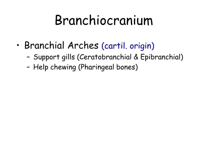 Branchiocranium