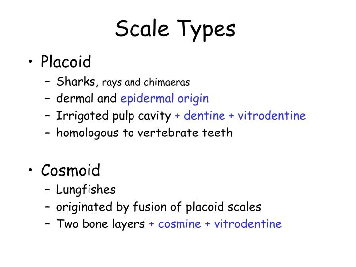 Scale Types