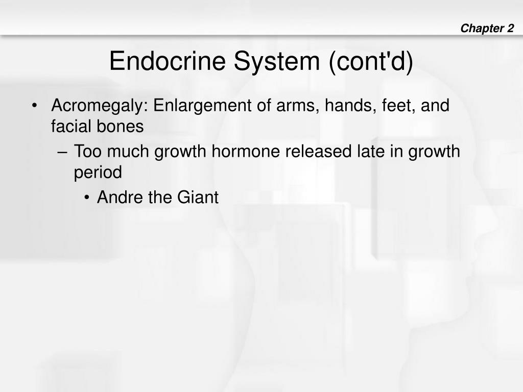 Endocrine System (cont'd)