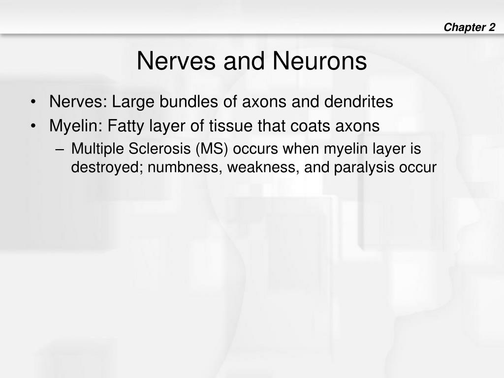 Nerves and Neurons