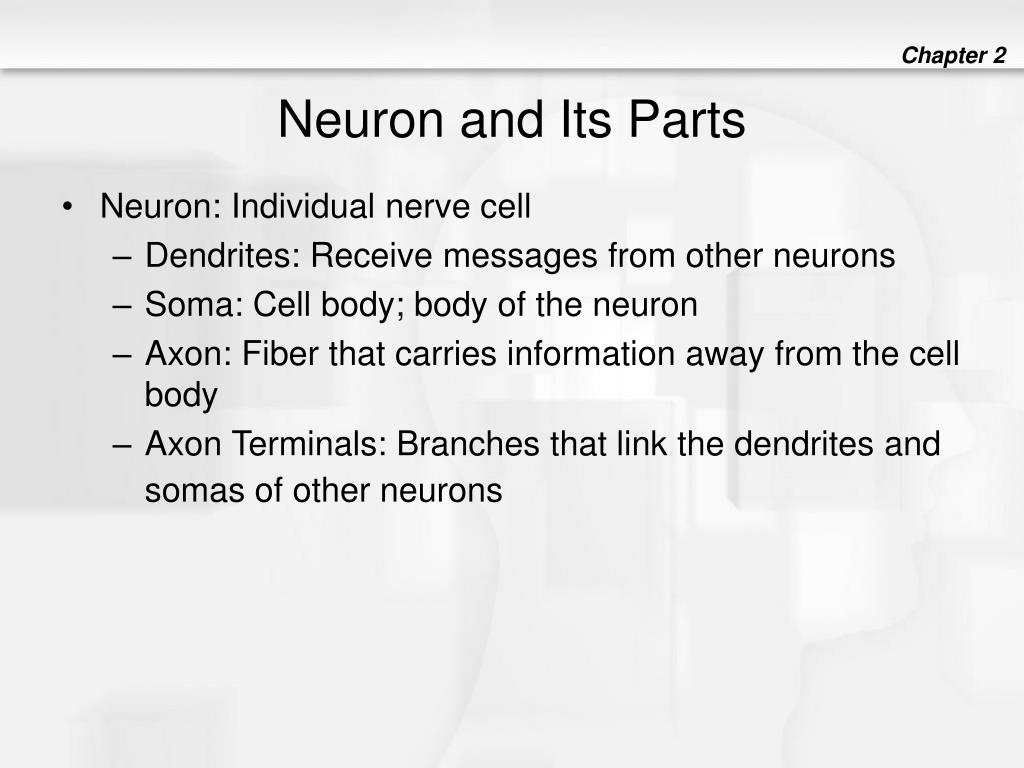 Neuron and Its Parts