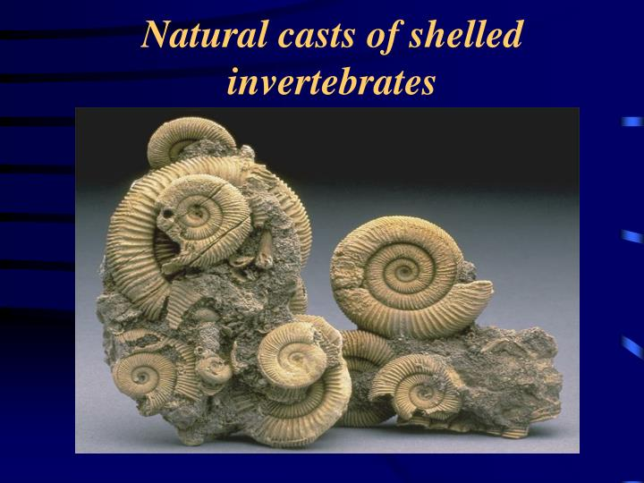 Natural casts of shelled invertebrates