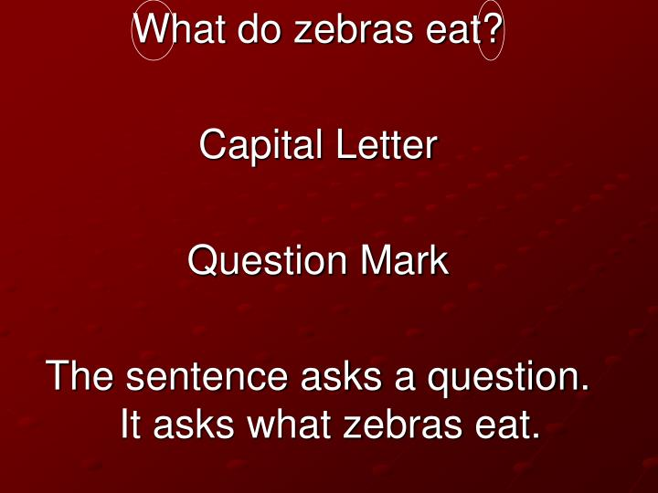 What do zebras eat?