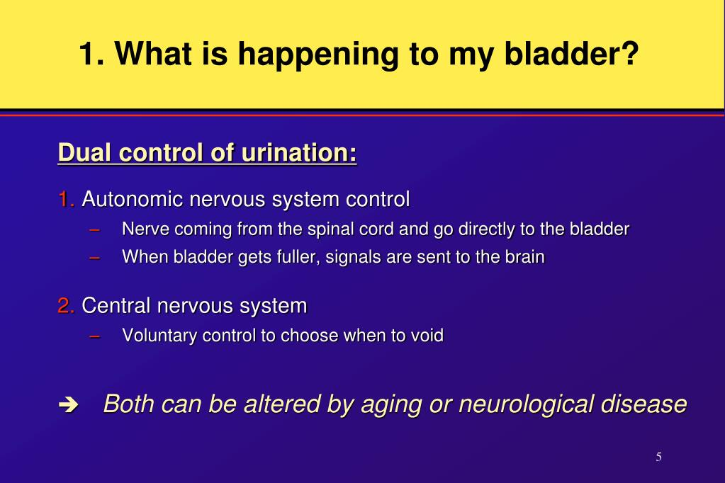 1. What is happening to my bladder?