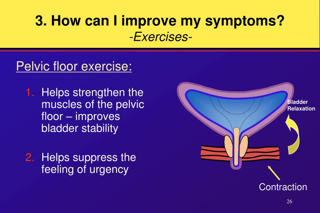 Helps strengthen the muscles of the pelvic floor – improves bladder stability