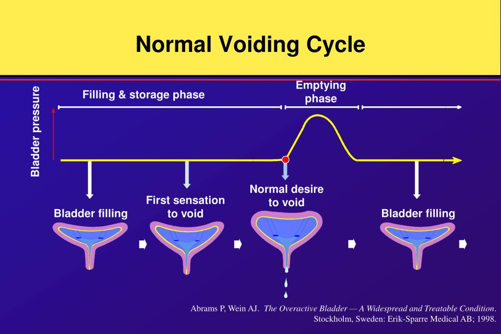 Normal Voiding Cycle