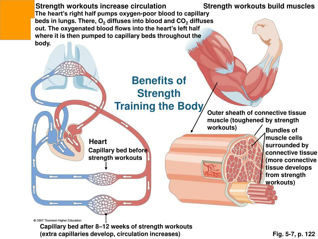 Strength workouts increase circulation