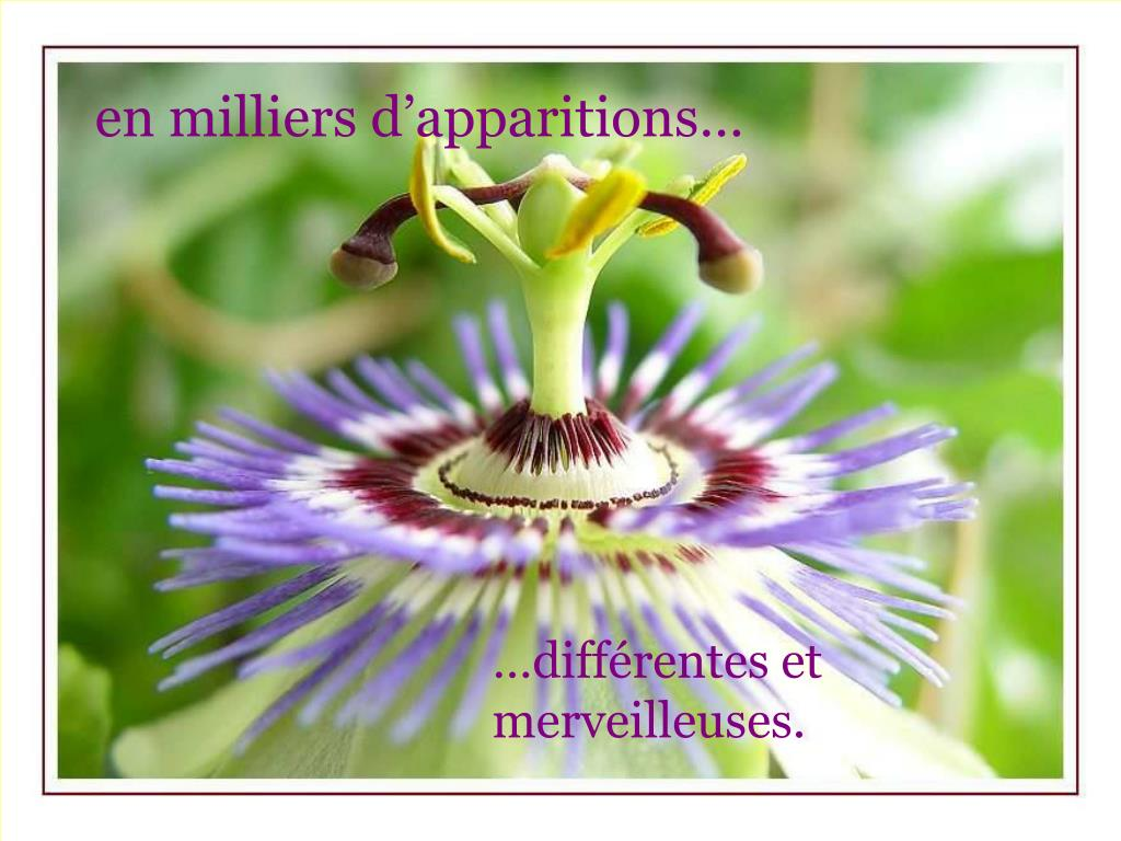 en milliers d'apparitions…