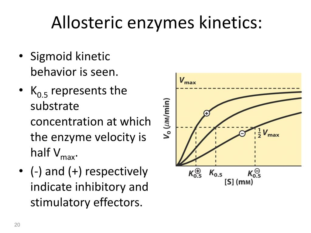 Allosteric enzymes kinetics: