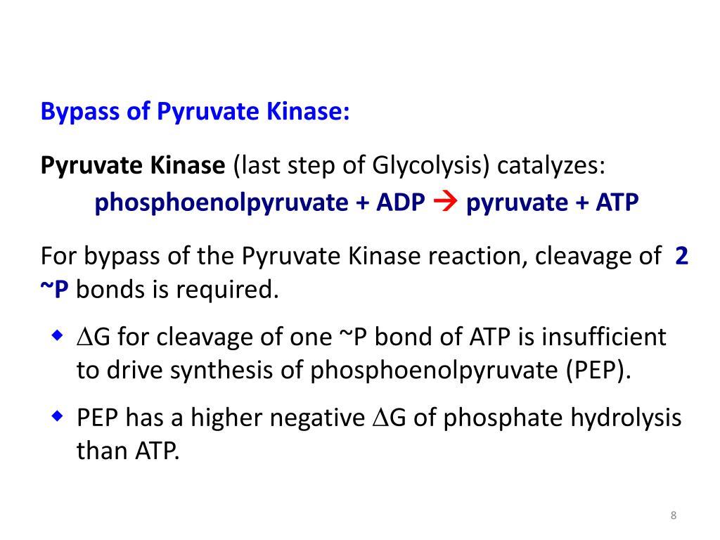 Bypass of Pyruvate Kinase: