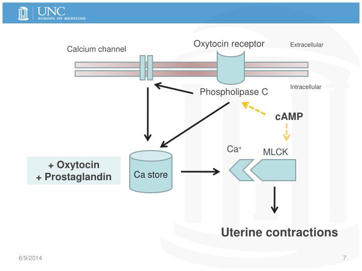 Oxytocin receptor