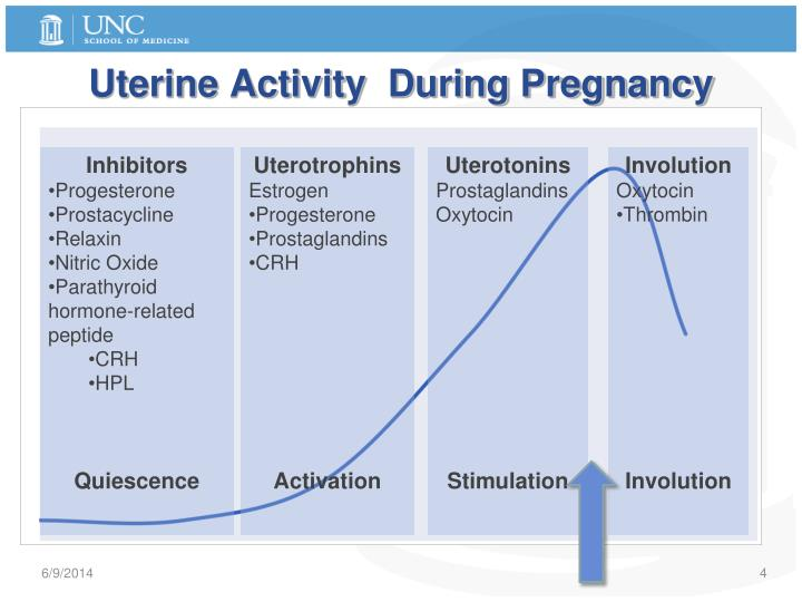 Uterine Activity  During Pregnancy