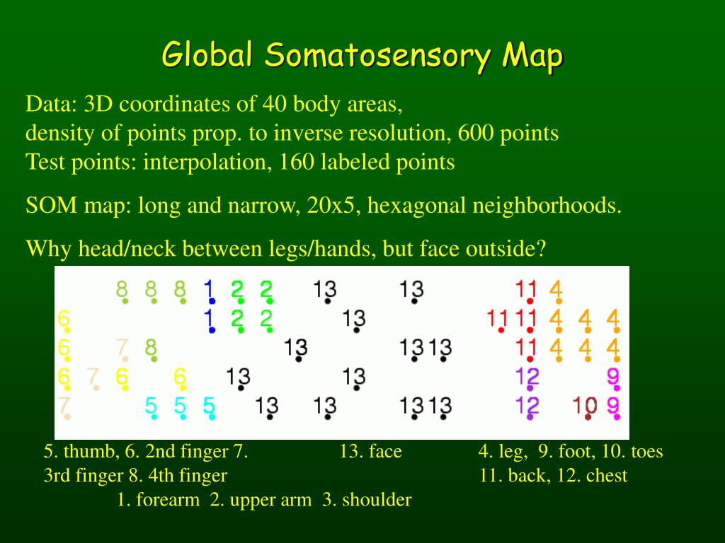 Global Somatosensory Map
