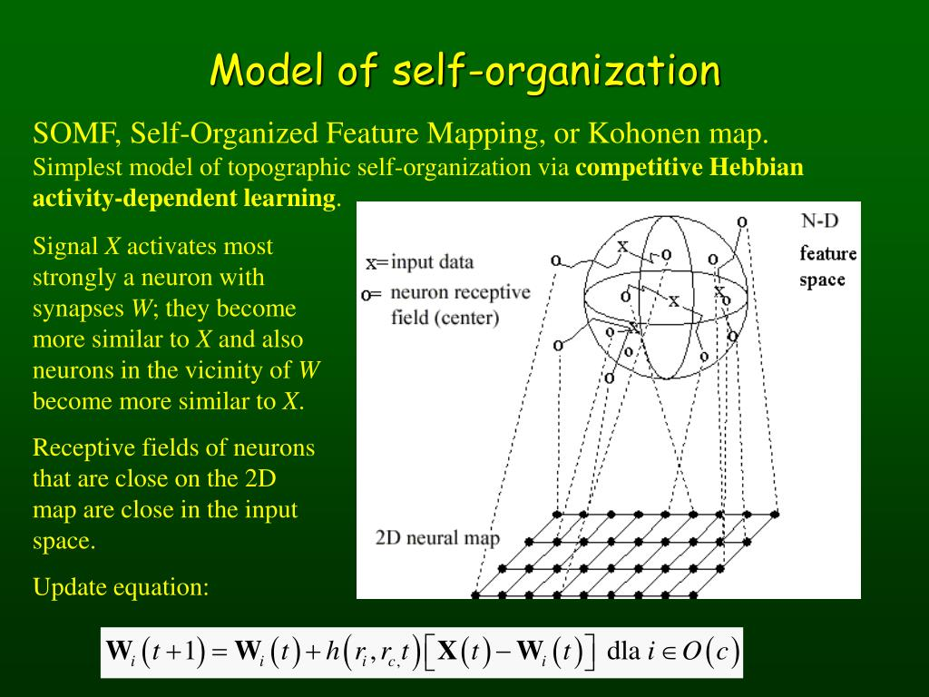 Model of self-organization