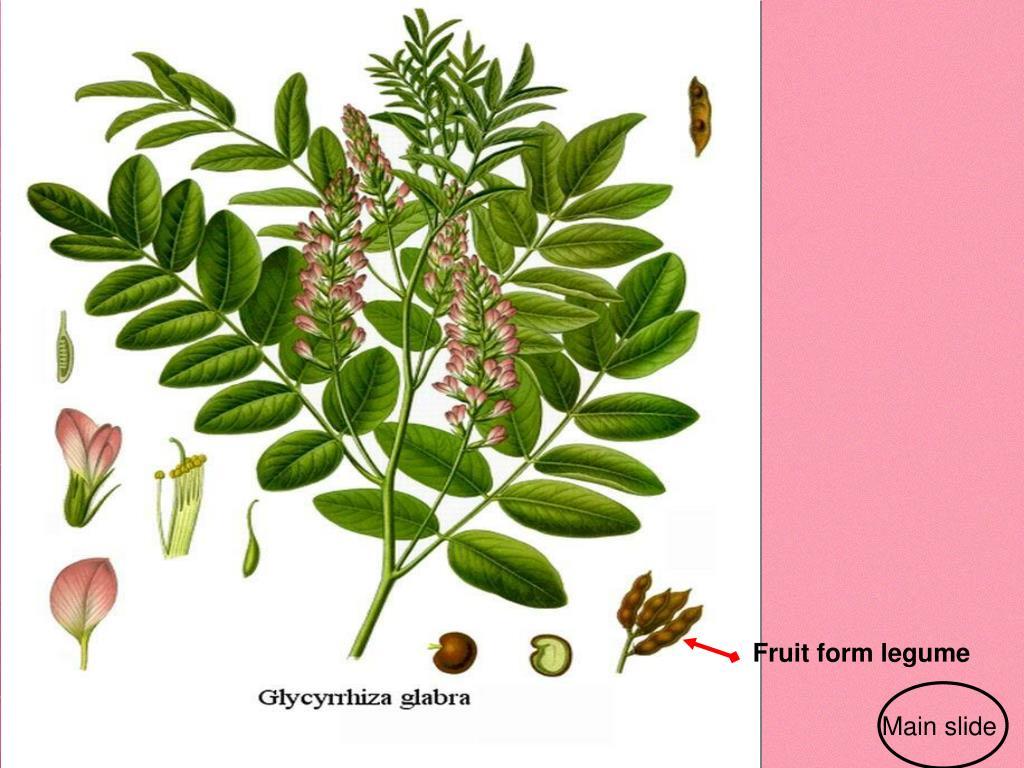 Fruit form legume
