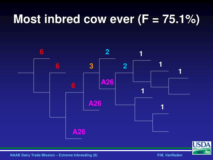 Most inbred cow ever (F = 75.1%)