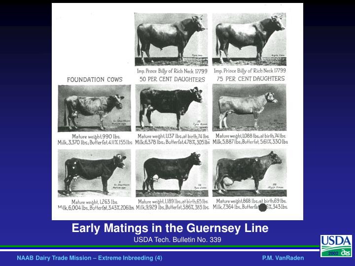 Early Matings in the Guernsey Line