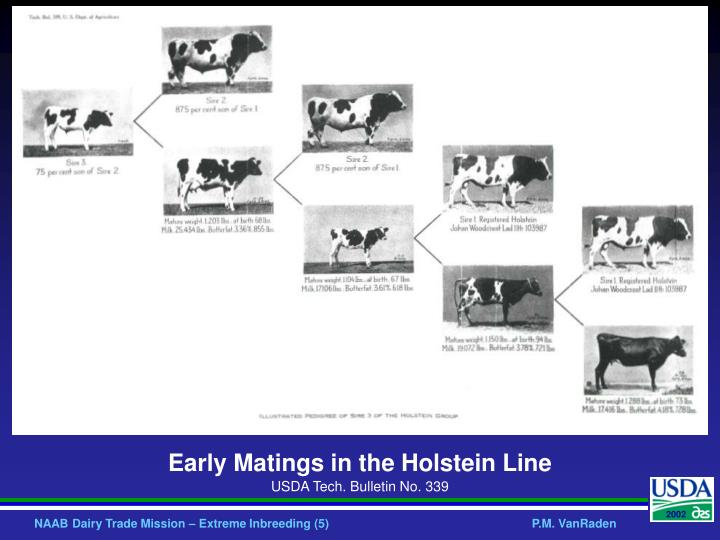 Early Matings in the Holstein Line