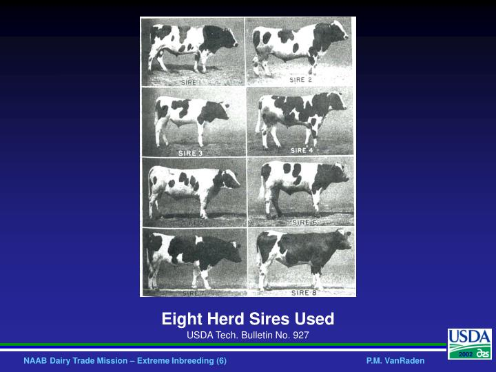 Eight Herd Sires Used