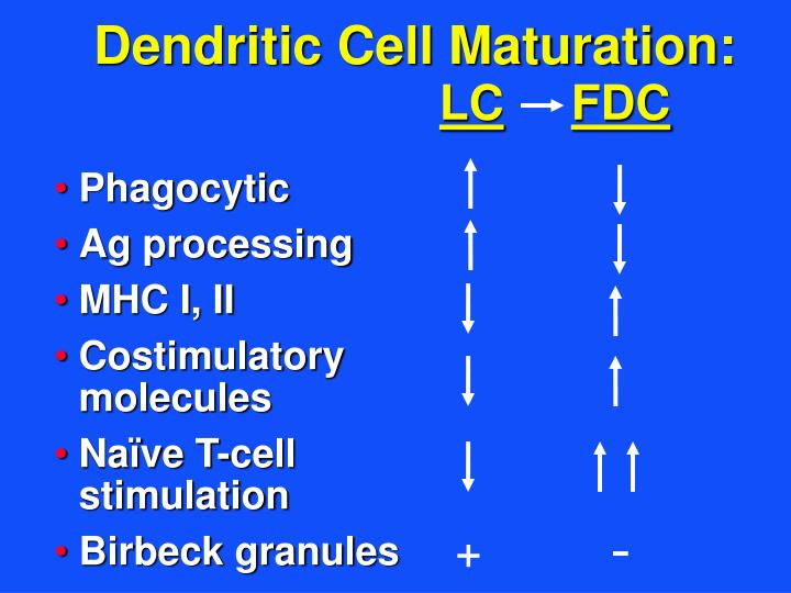 Dendritic Cell Maturation: