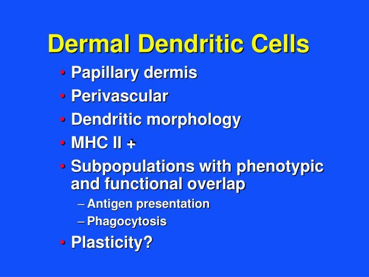 Dermal Dendritic Cells
