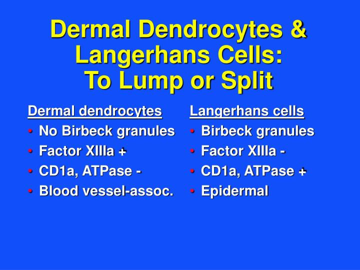 Dermal dendrocytes