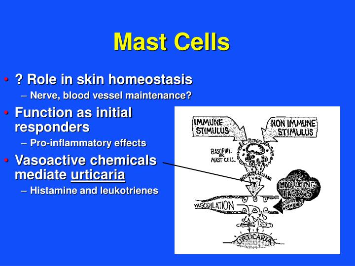 ? Role in skin homeostasis