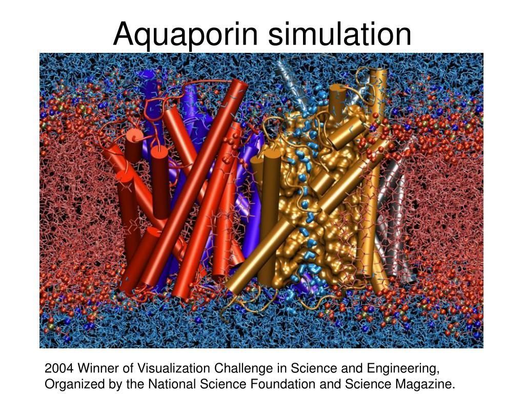Aquaporin simulation
