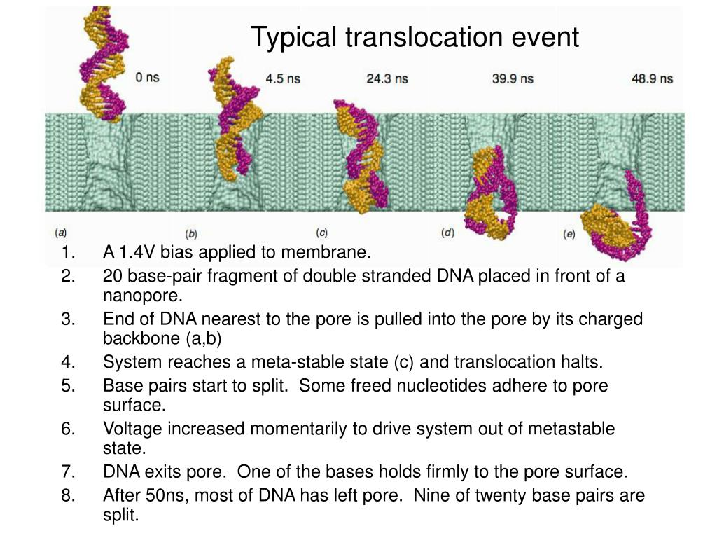 Typical translocation event
