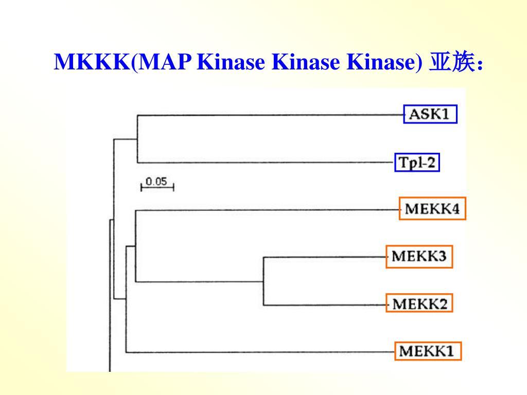 MKKK(MAP Kinase Kinase Kinase)
