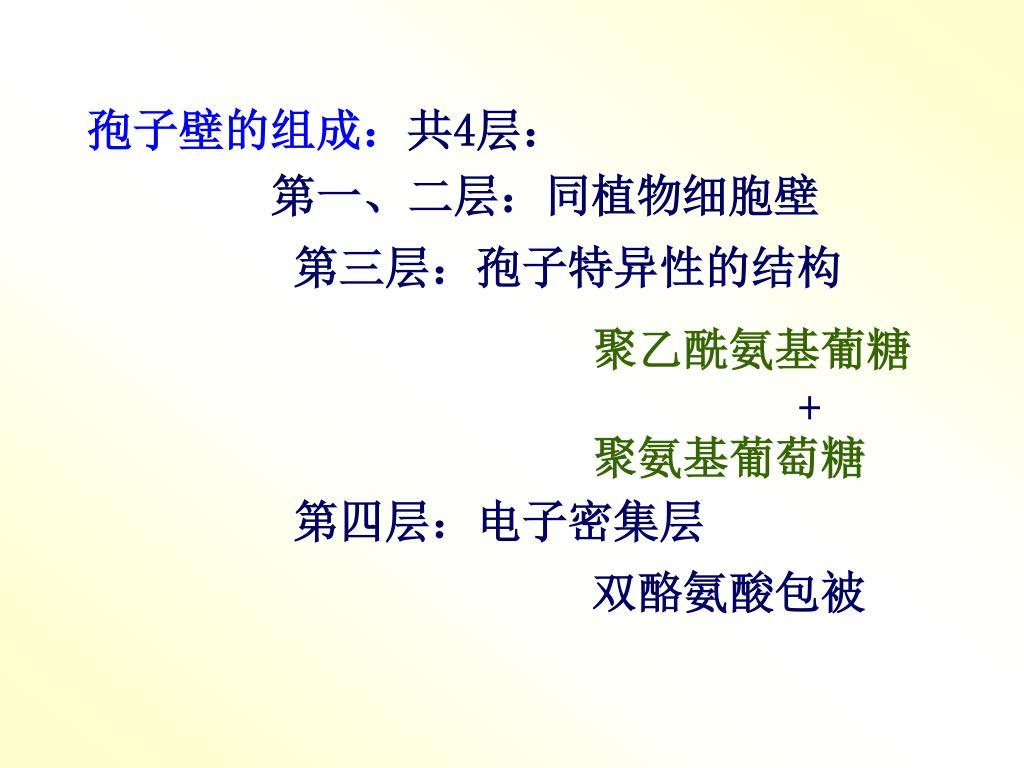 孢子壁的组成: