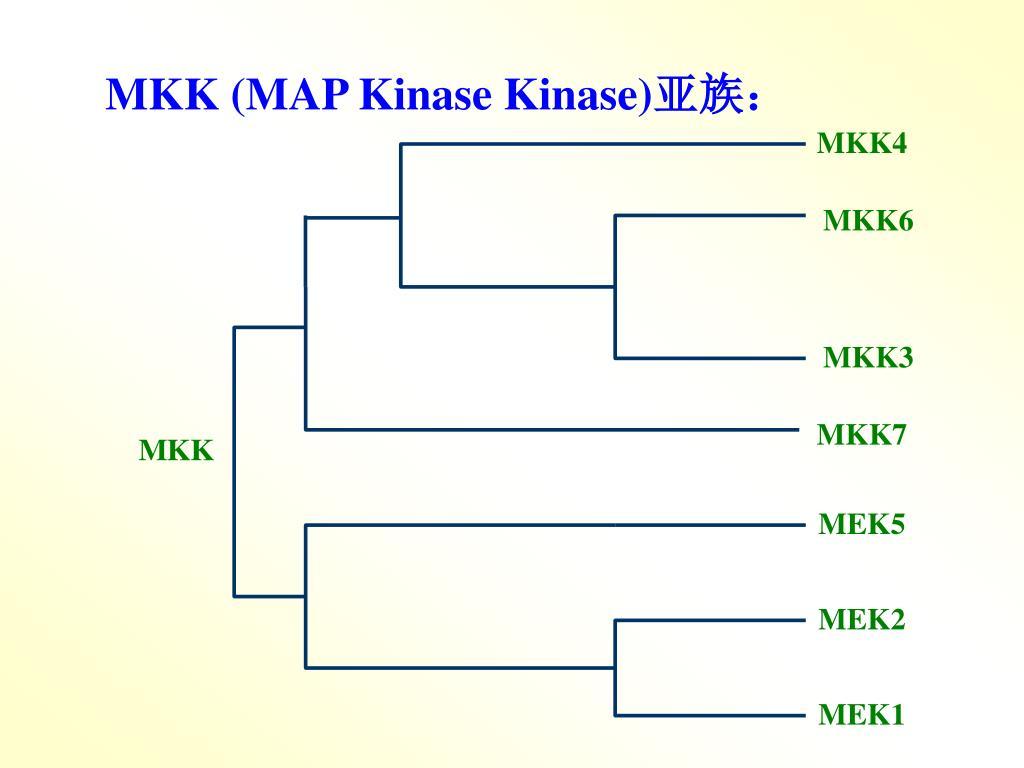 MKK (MAP Kinase Kinase)