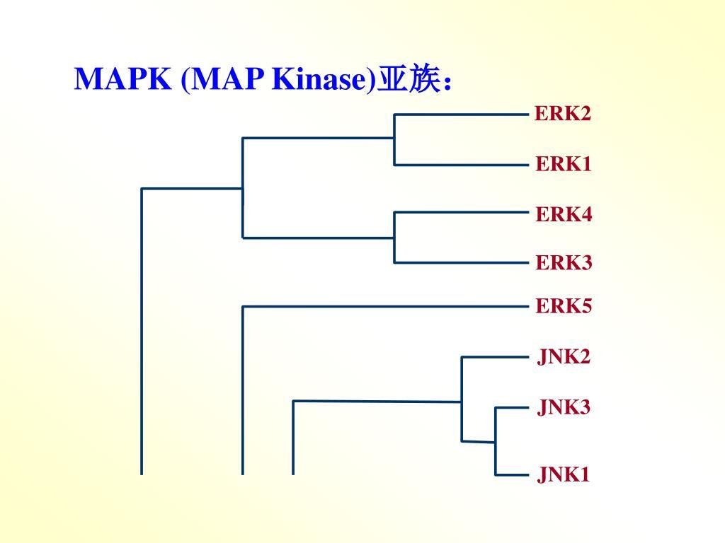 MAPK (MAP Kinase)